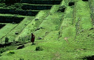 Inca Agricultural Terraces