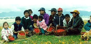 Chinchero Children With Flowers