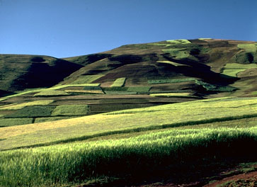 The Fertile Fields of Chinchero