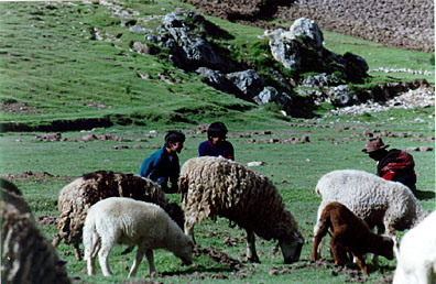 Children Watching Sheep